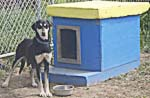 Sled Dog Kennel Tours